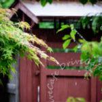 ディリーフォト2016/05/30 雨模様