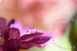 見よう見まねじゃ難しすぎるぅ、花と水玉