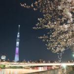 Lightroomで桜夜景を補正してみる
