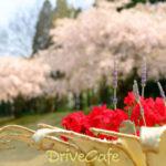 川村記念美術館、名残の桜2
